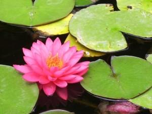 pink-21143_640