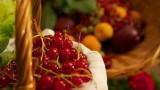 berry-174282_640