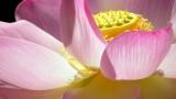 flower-170422_640